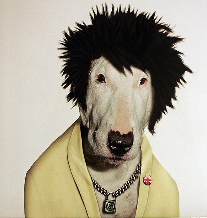 funny dog costume sid vicious