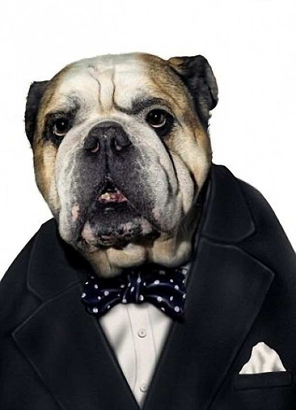 funny dog costume winston churchill