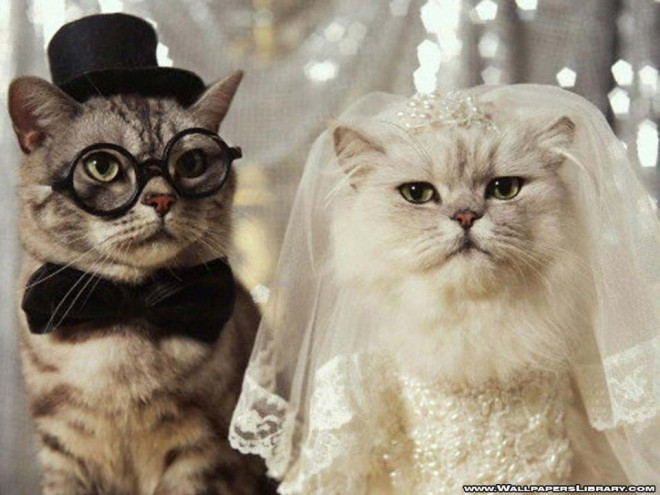 wedding  dog and cat
