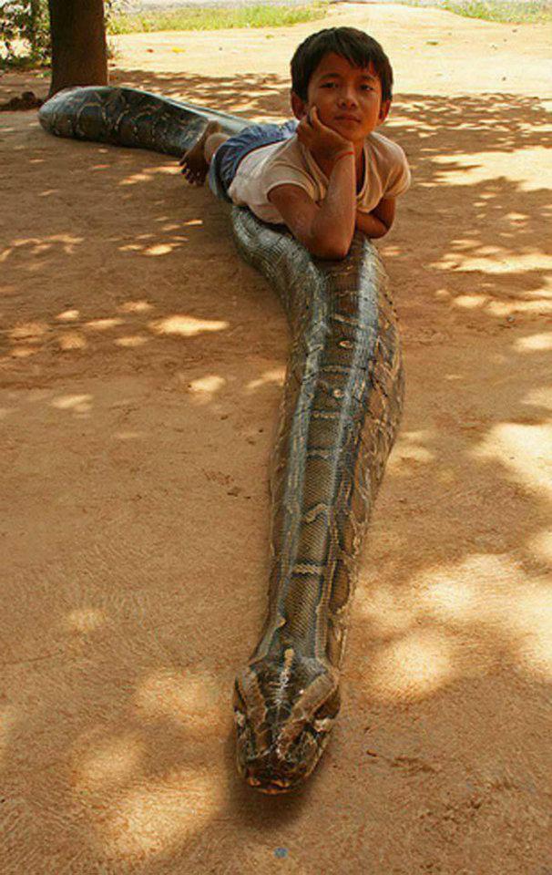baby laying on snake