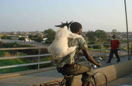 funny animal carrying in bicycle