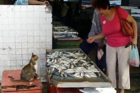 cat sells fish