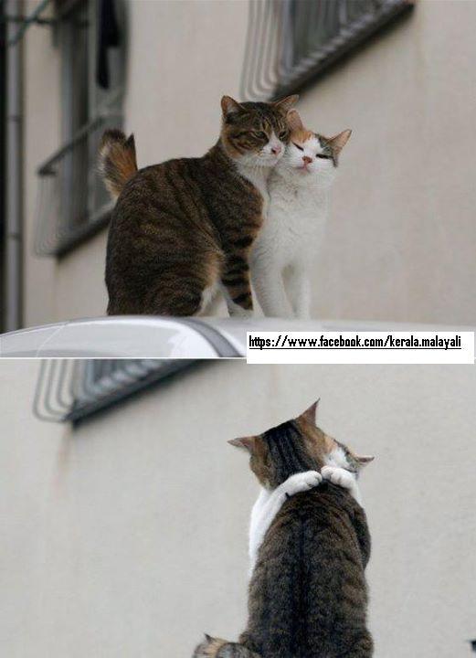 cats romance