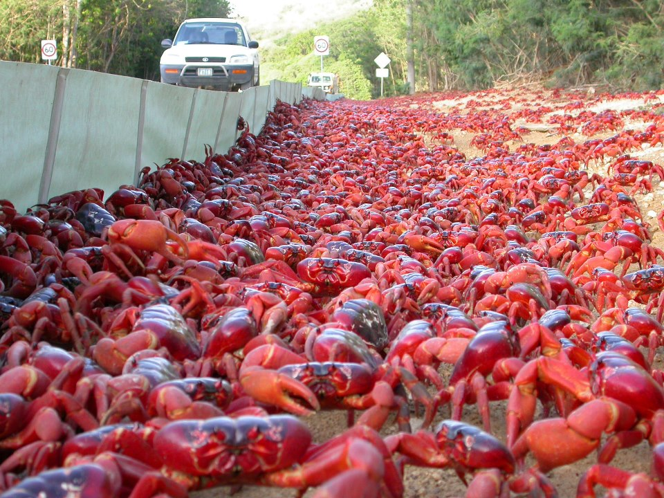 give way for crabs