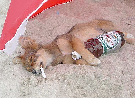 drunken dog