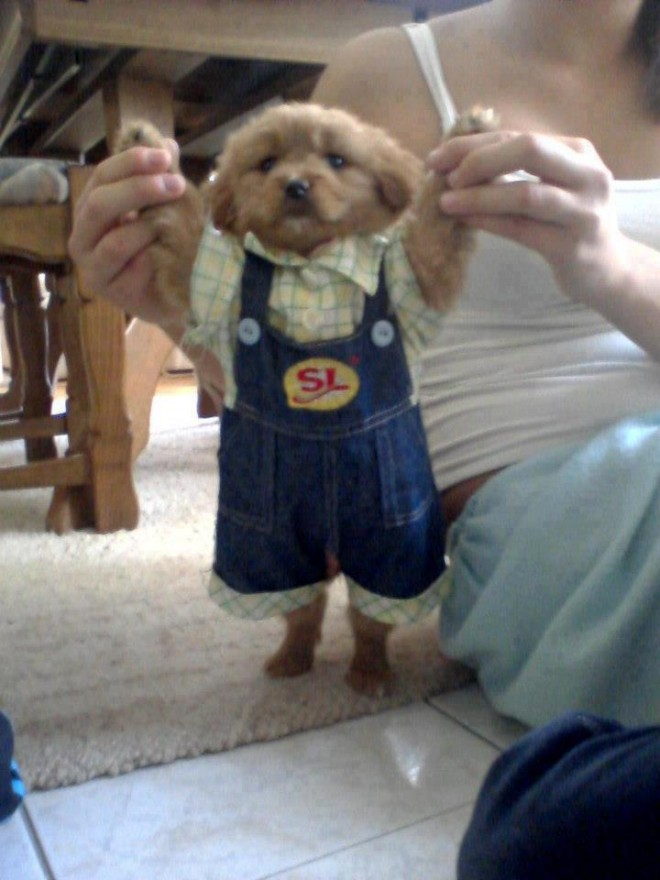 funny dog dress