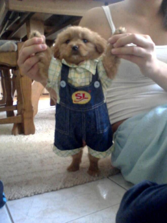 funny dog dress
