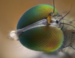 insect head macro photography