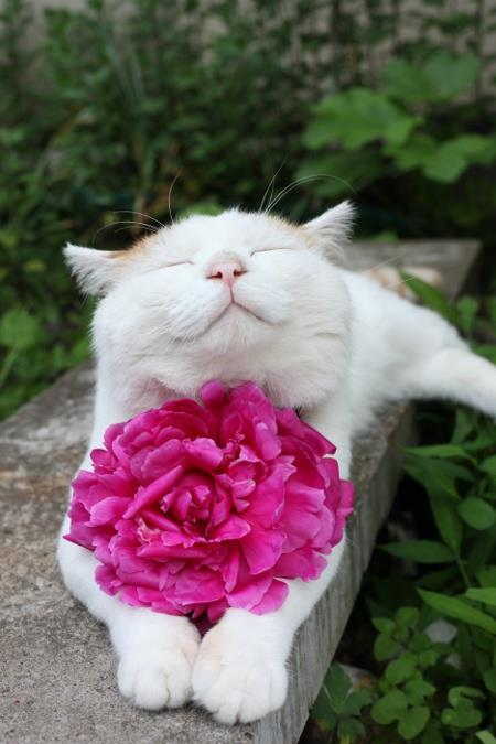 beautiful funny cat picture with rose