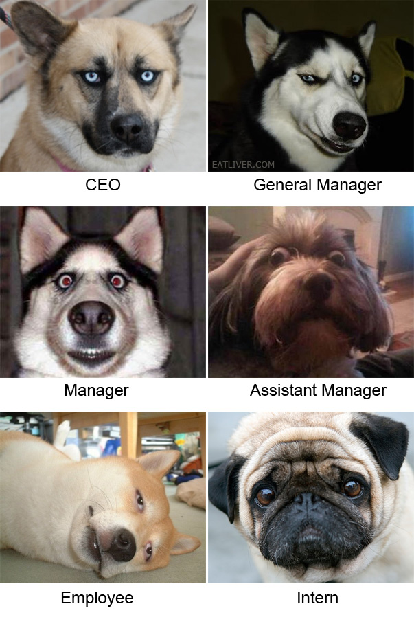 office hierarchy