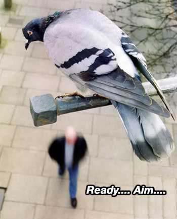 ready aim
