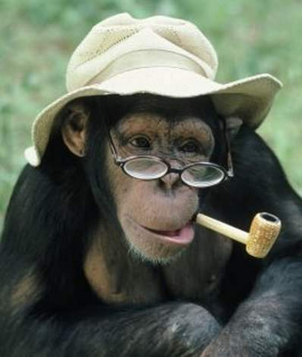funny monkey smoking picture