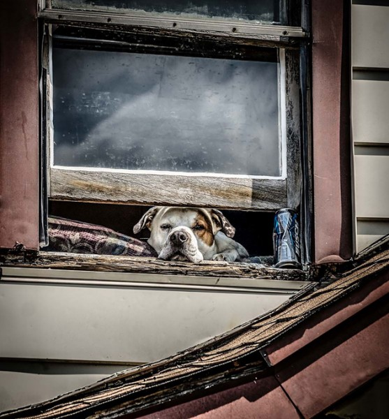 dog looking window