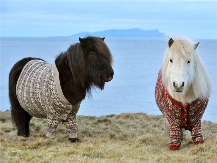 pets wearing weaters