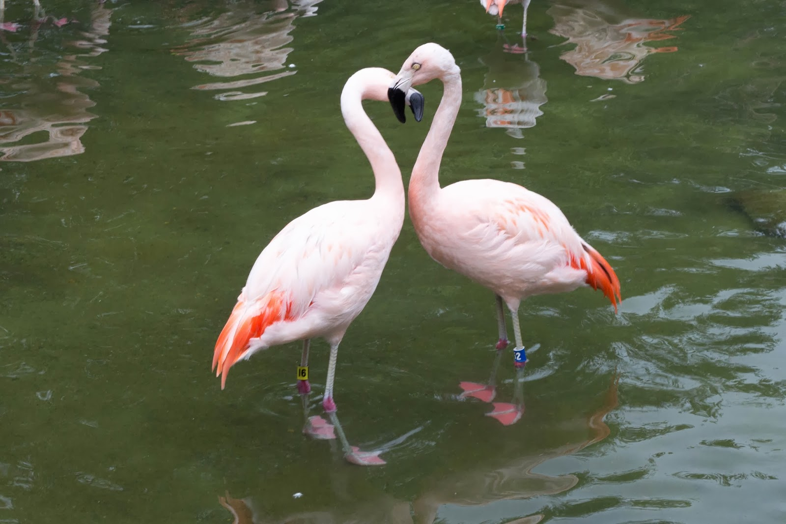 river flamingos photography
