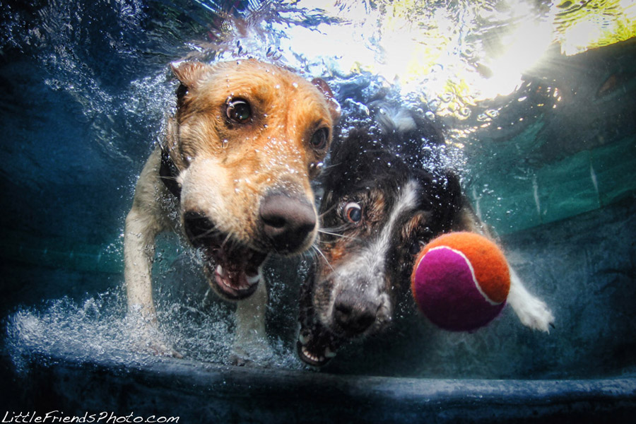 funny dog under water seth casteel