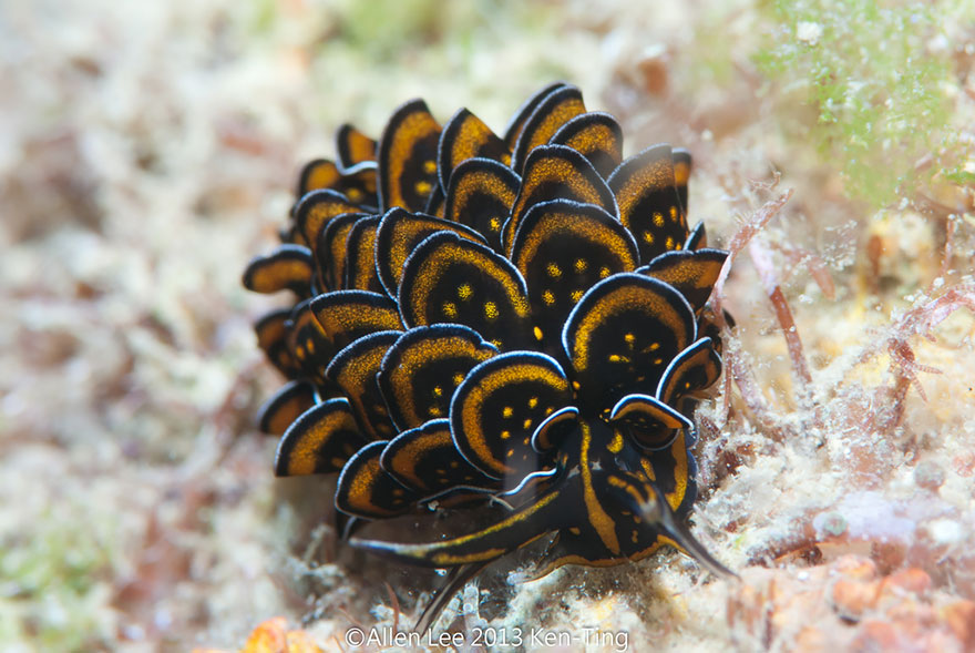earth slugs photography