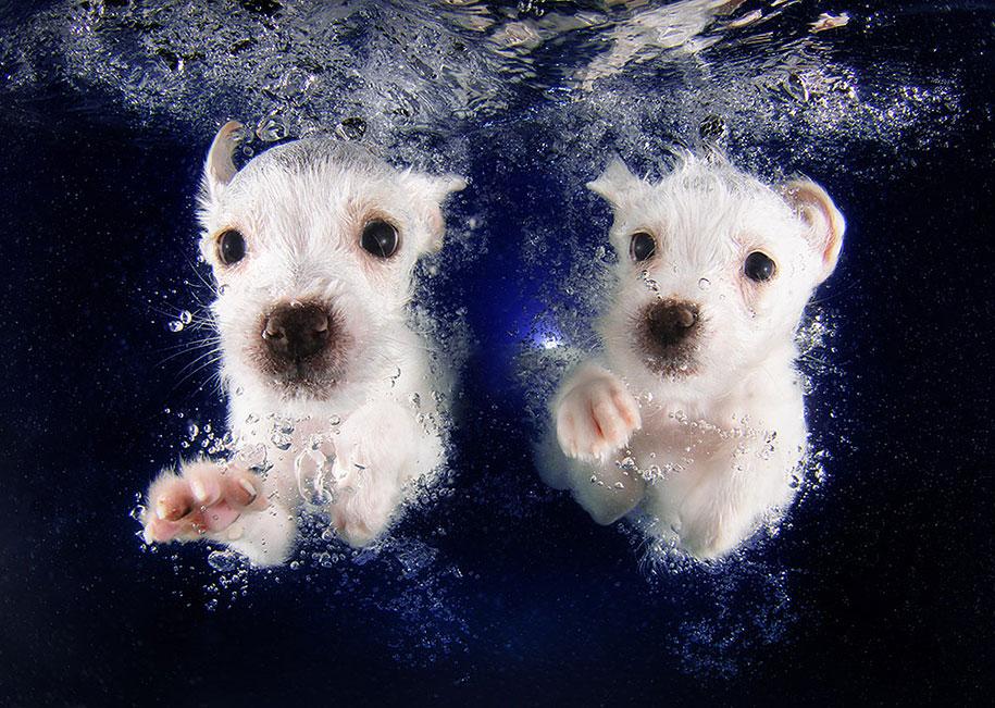 funny dog under water seth casteel