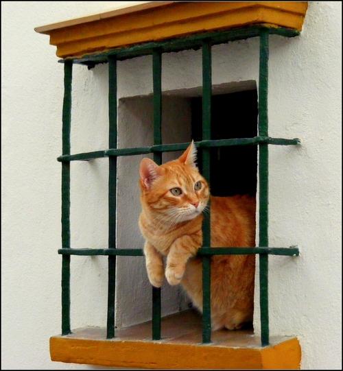 cat looking window