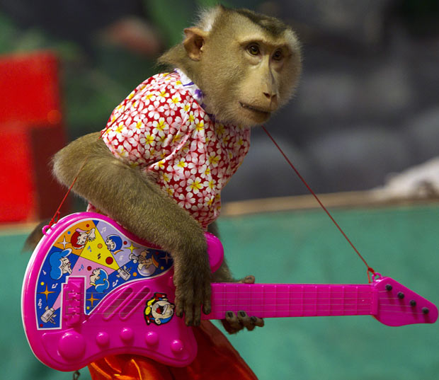 funny and stylish monkey picture