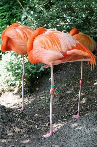 grace flamingos photography