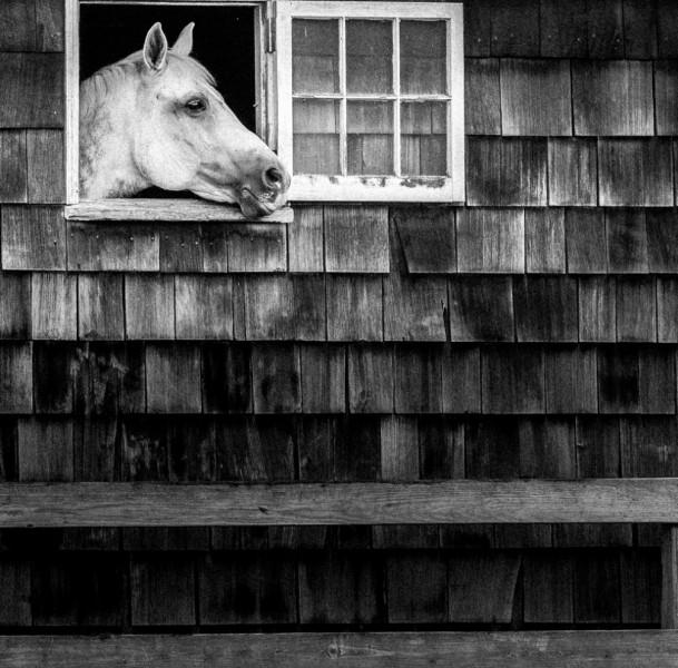 horse looking window