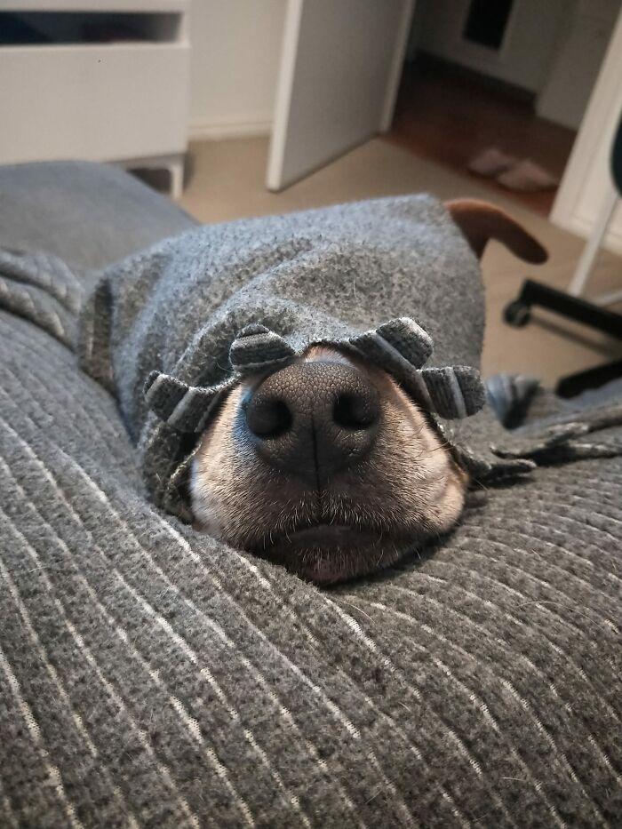 funny hidden dog challenge harley greco
