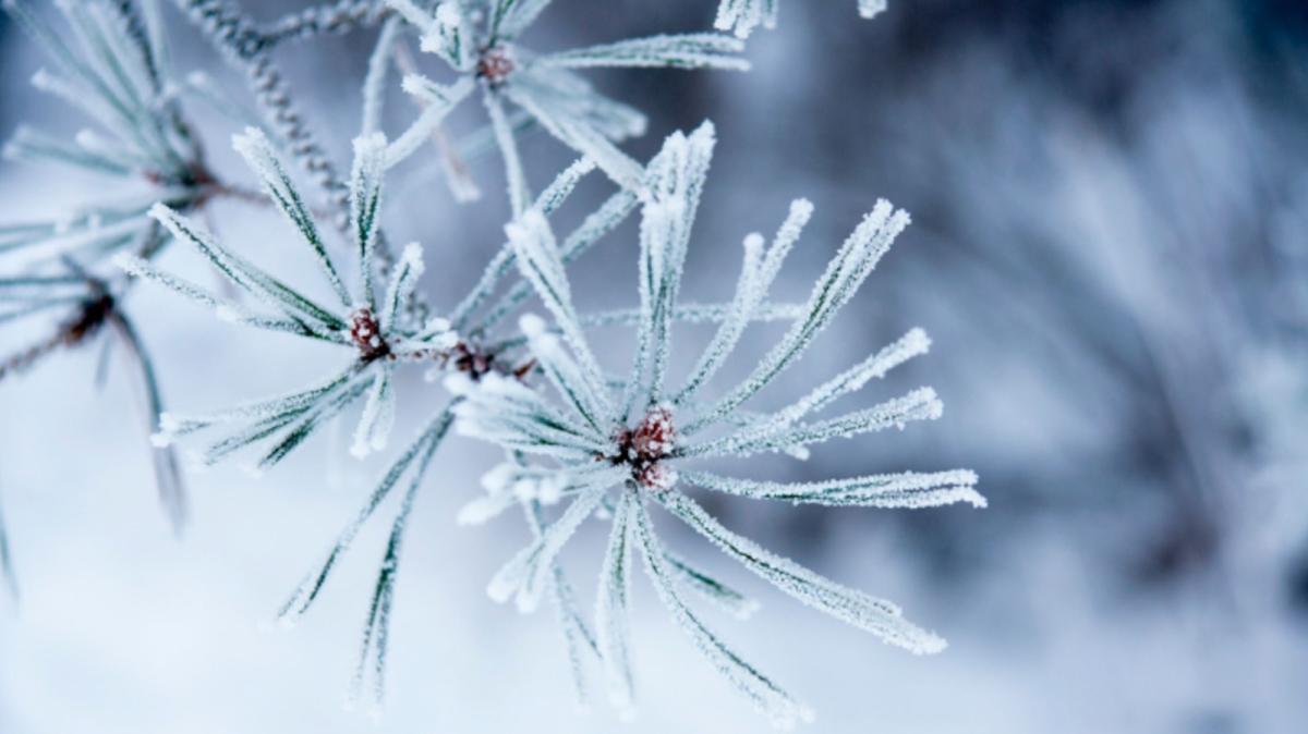 wonderful winter weather arallyn primm