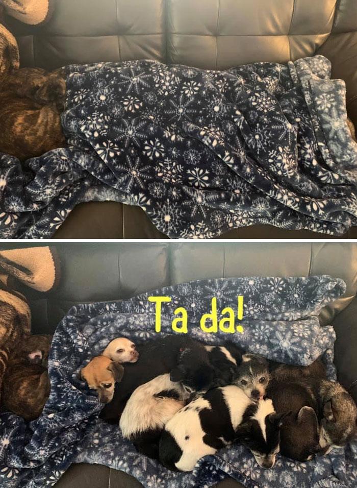funny hidden dog challenge vanessa ryan