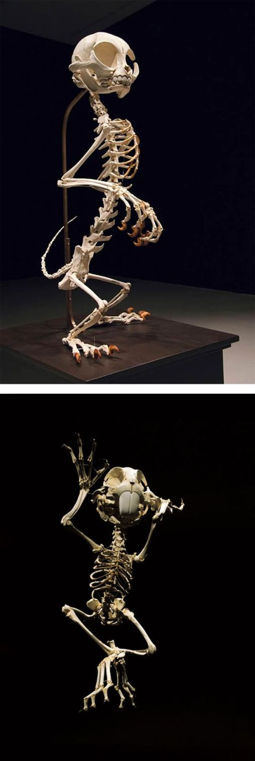 skeleton cartoon characters hyungkoo lee