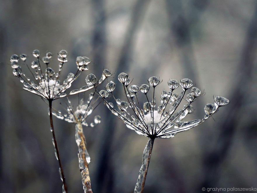 beautiful ice formation frozen meadow