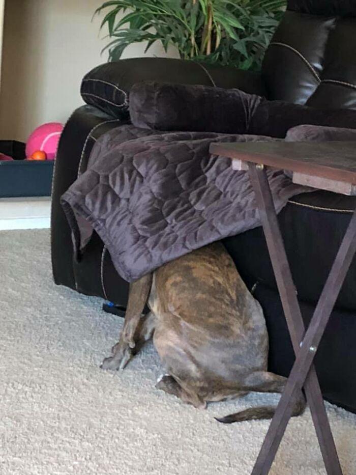 funny hidden dog challenge michelle mabarak steiner