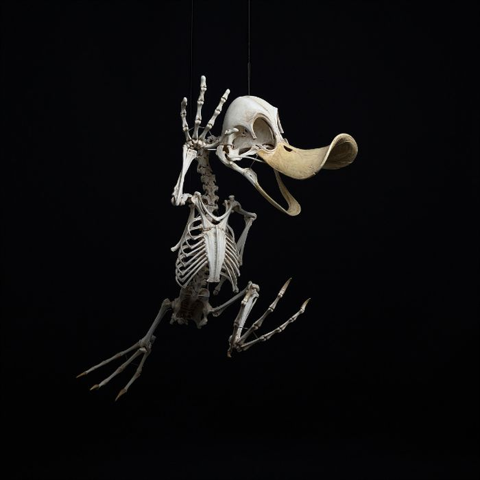 skeleton cartoon characters hyungkoo lee