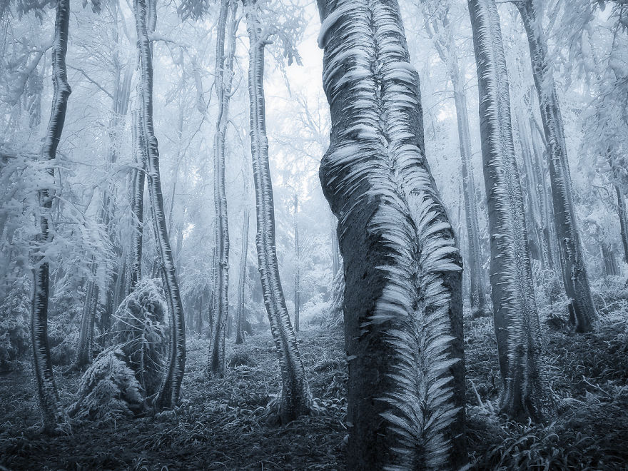 beautiful ice formation trees czezh forest