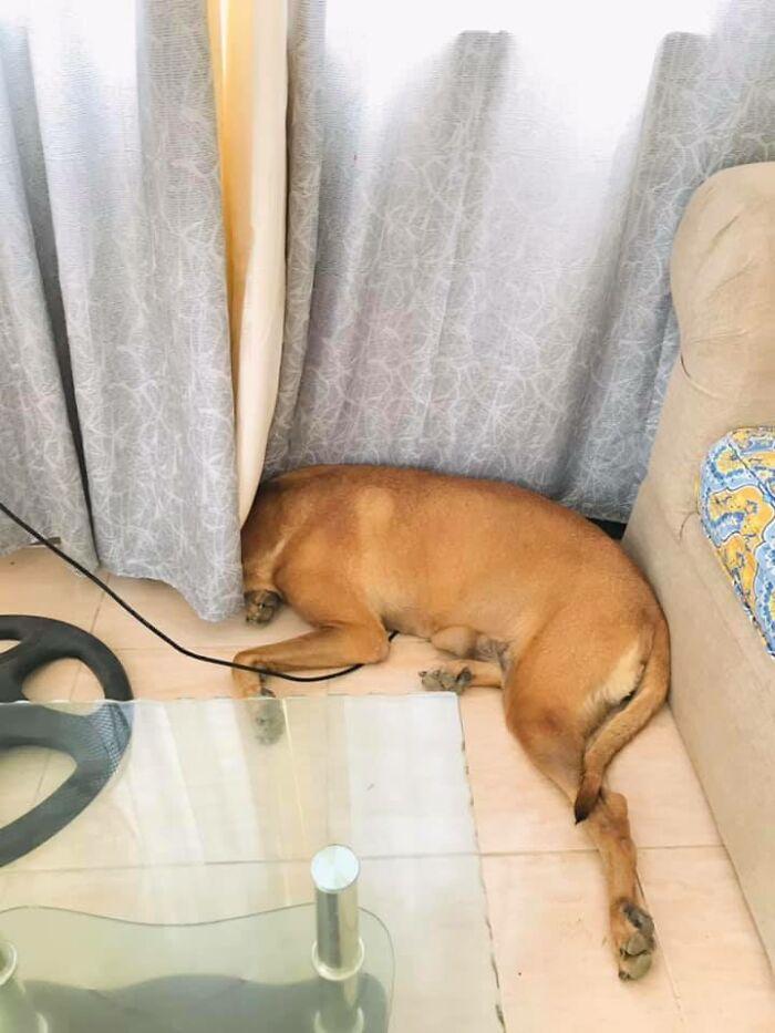 funny hidden dog challenge clarisse