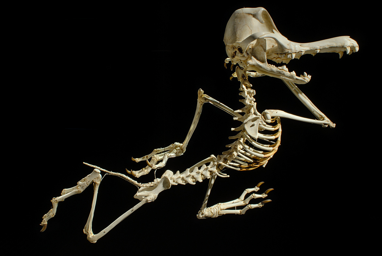 funny skeleton cartoon characters hyungkoo lee
