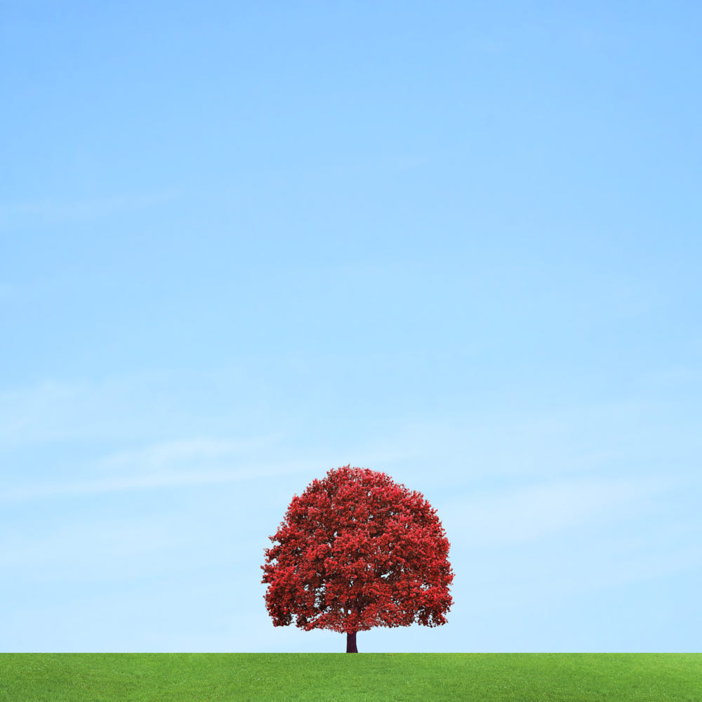 solitary tree photography red pascal krumm