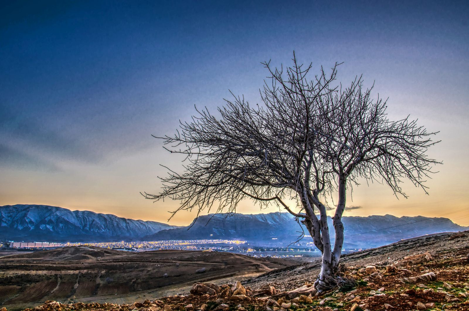 beautiful solitary tree photography ramin rahmani nejad