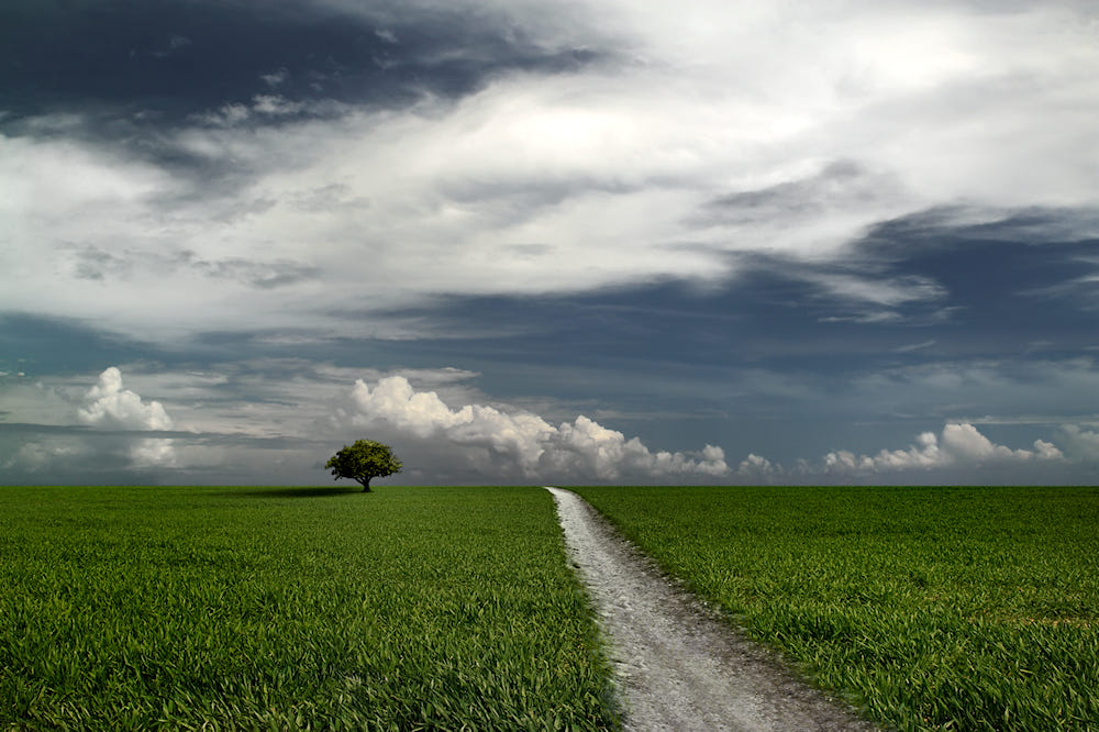 beautiful solitary tree photography carlos gotay