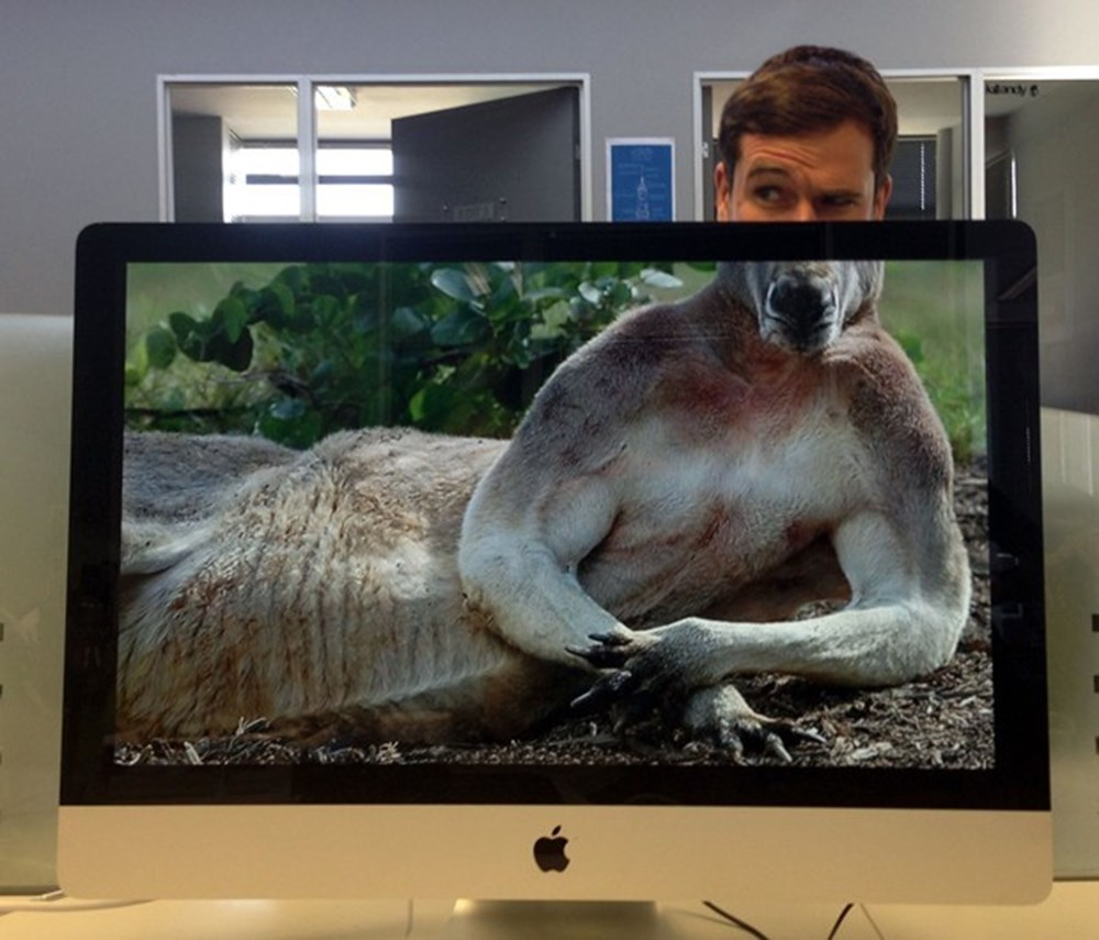 funny desk animal body picture mike whiteside