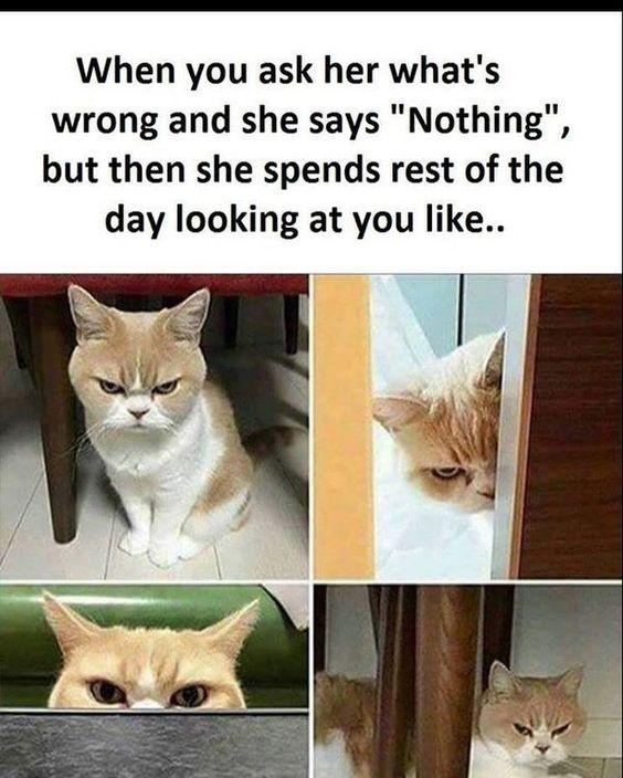 funny husband wife memes image