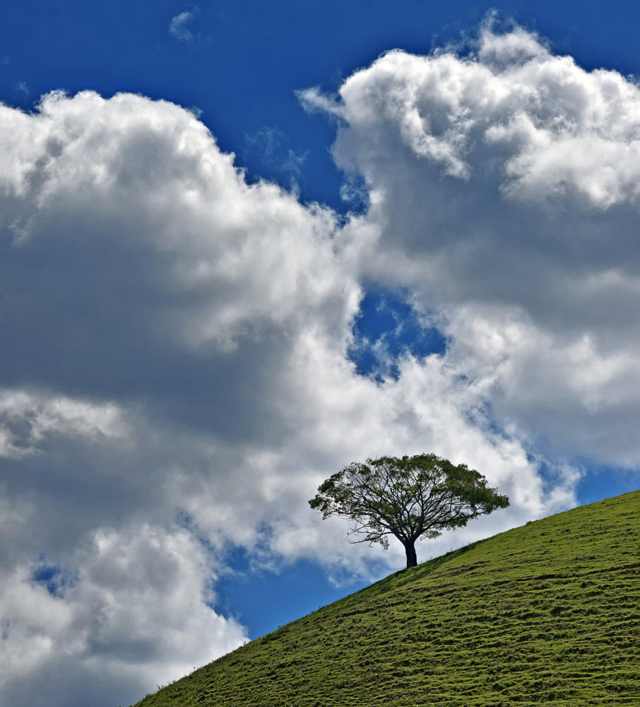 beautiful solitary tree photography otavio oliva