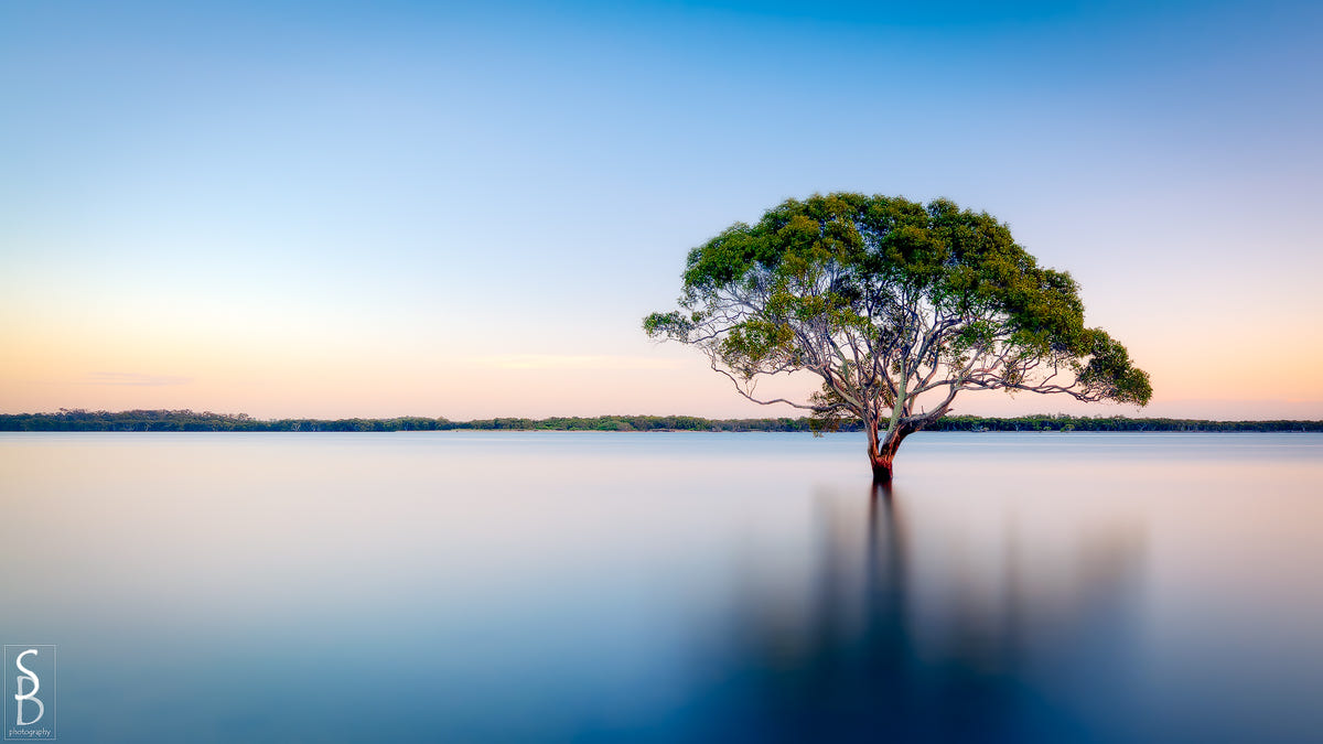 beautiful solitary tree photography stephen bird