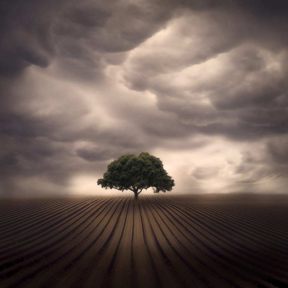 solitary tree photography sky not limit pedro quintela