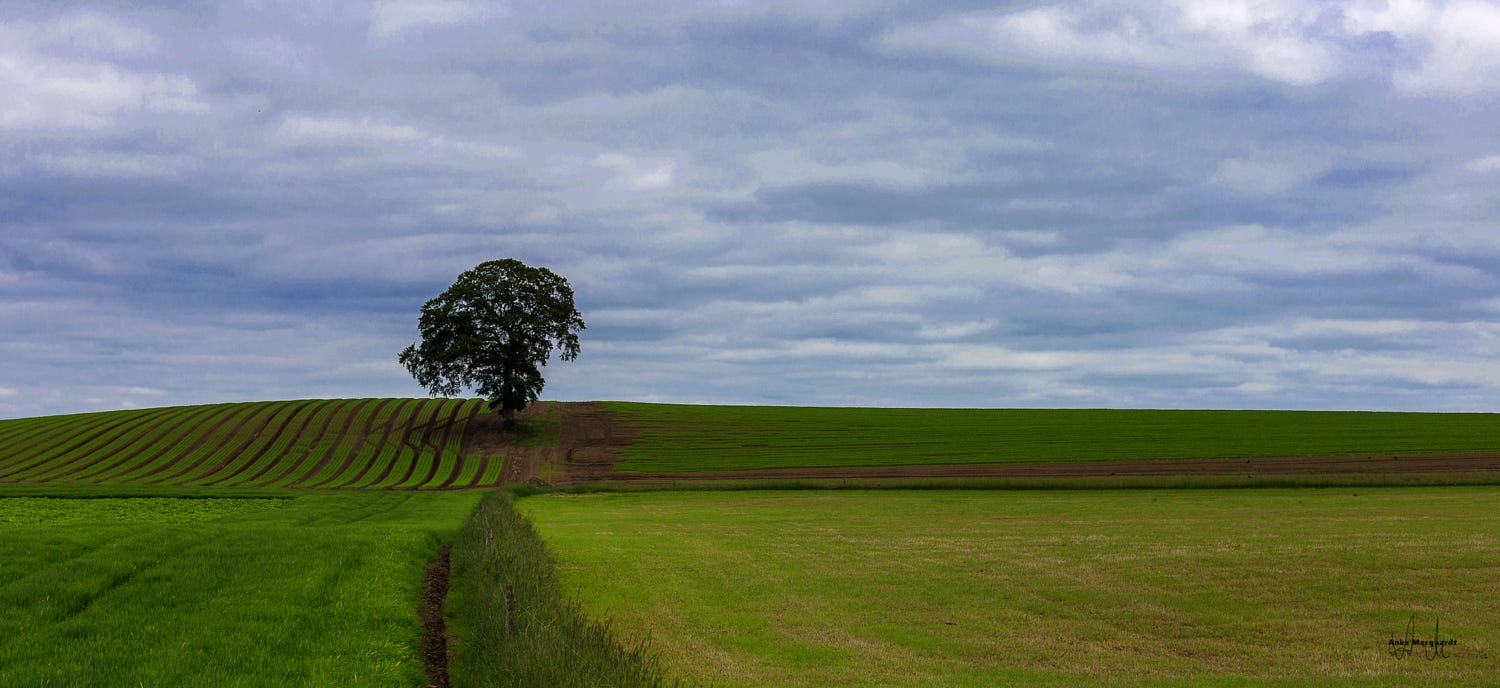 solitary tree photography plowed field anke marquardt