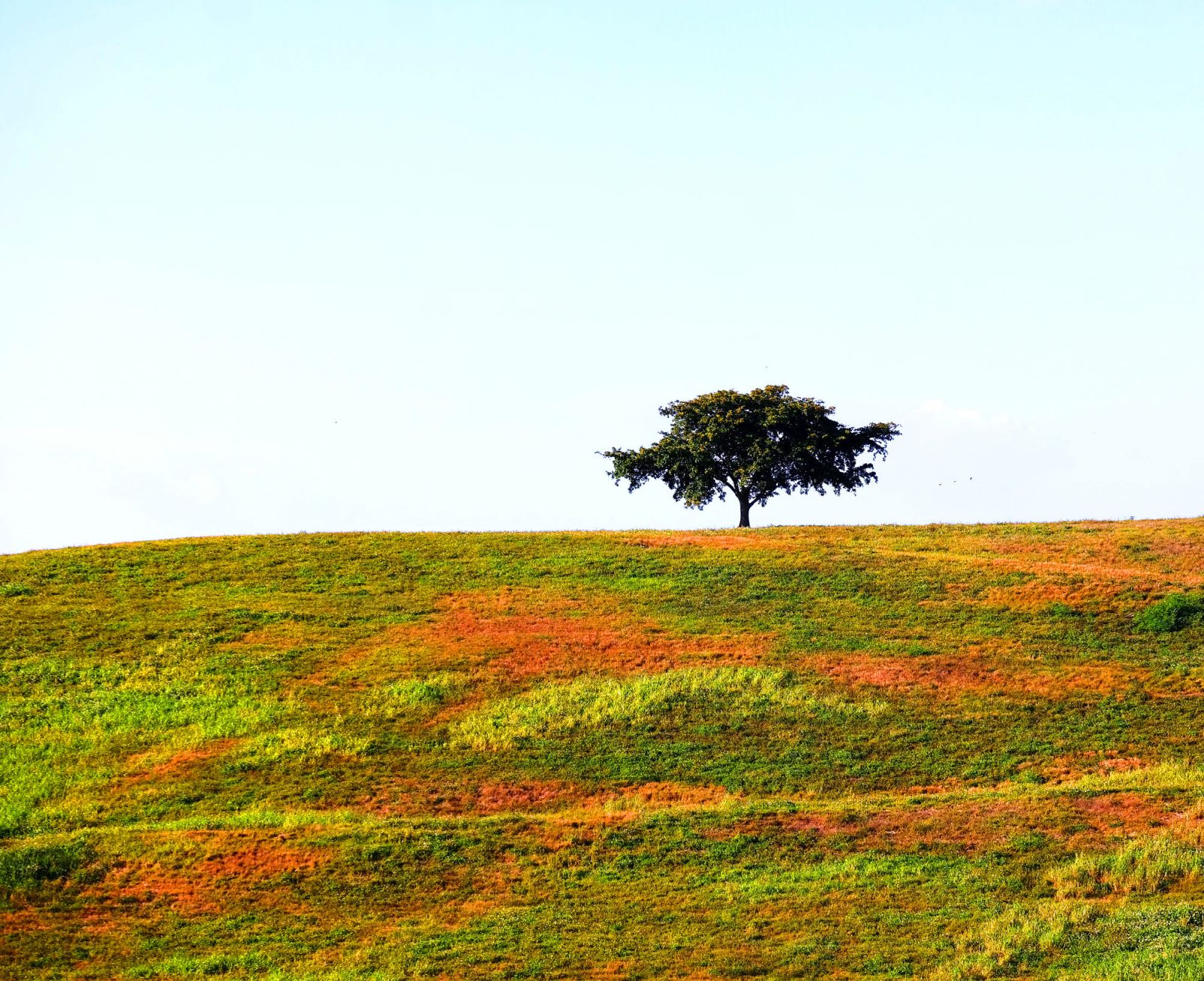 beautiful solitary tree photogrphy smadar sasson