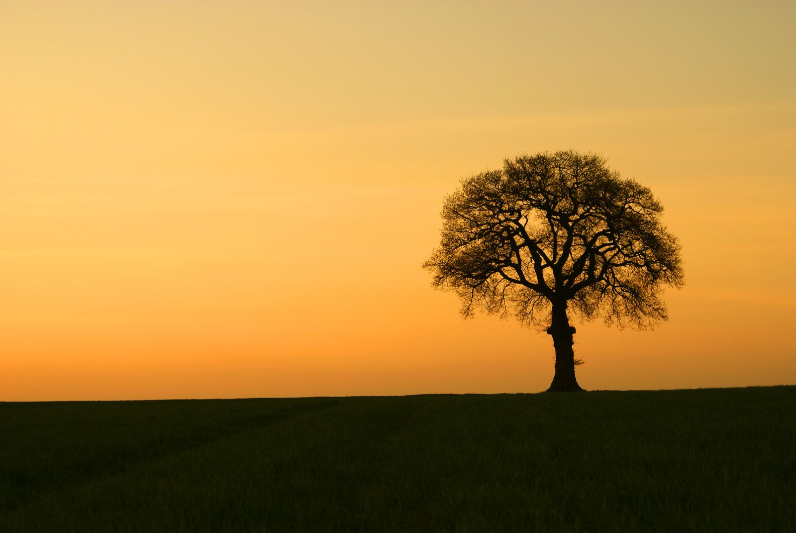 solitary tree photography sunset tom hills