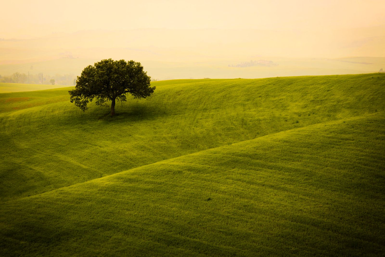 beautiful solitary tree photography gabriele riva