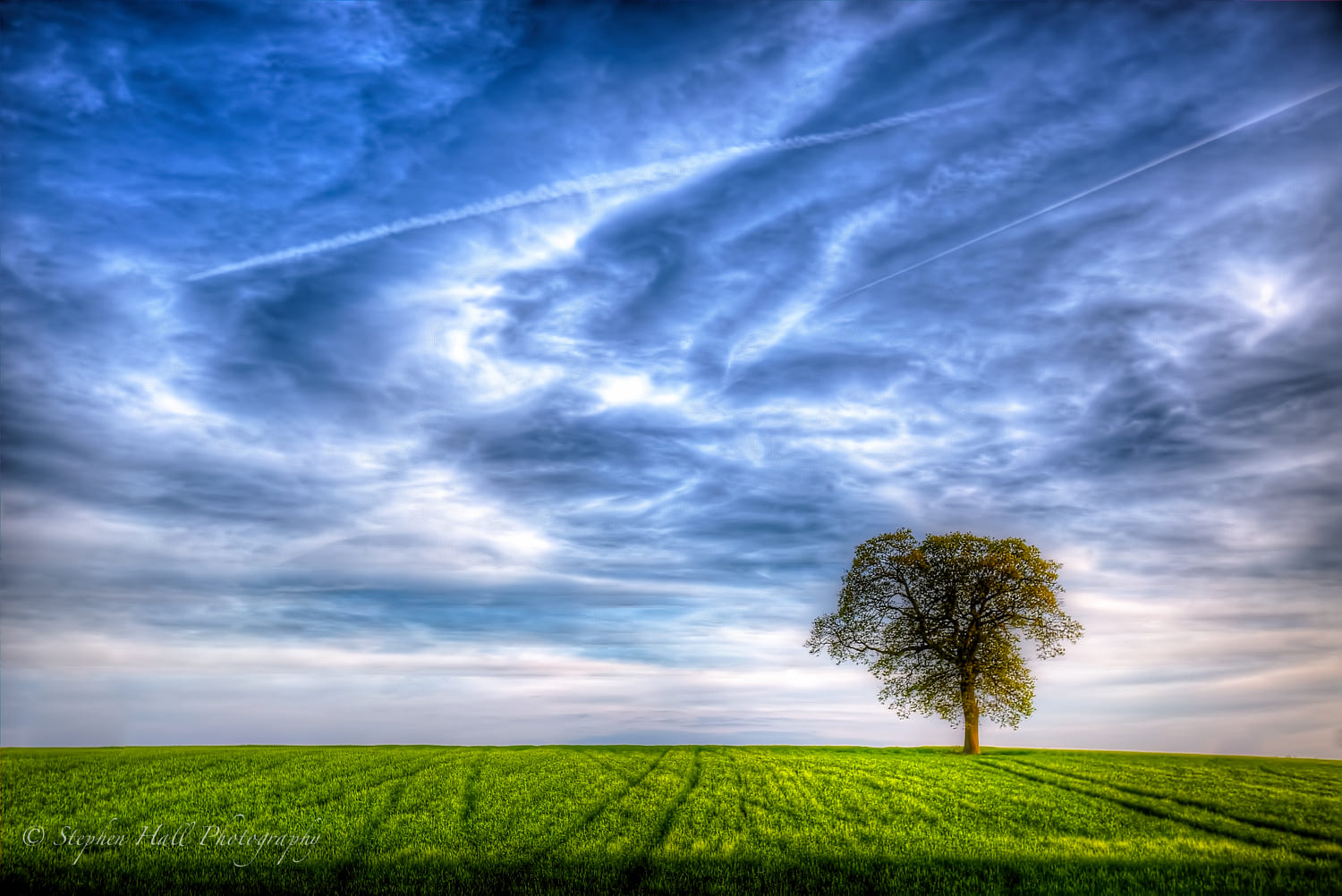 solitary tree photography welcome world stephen hall