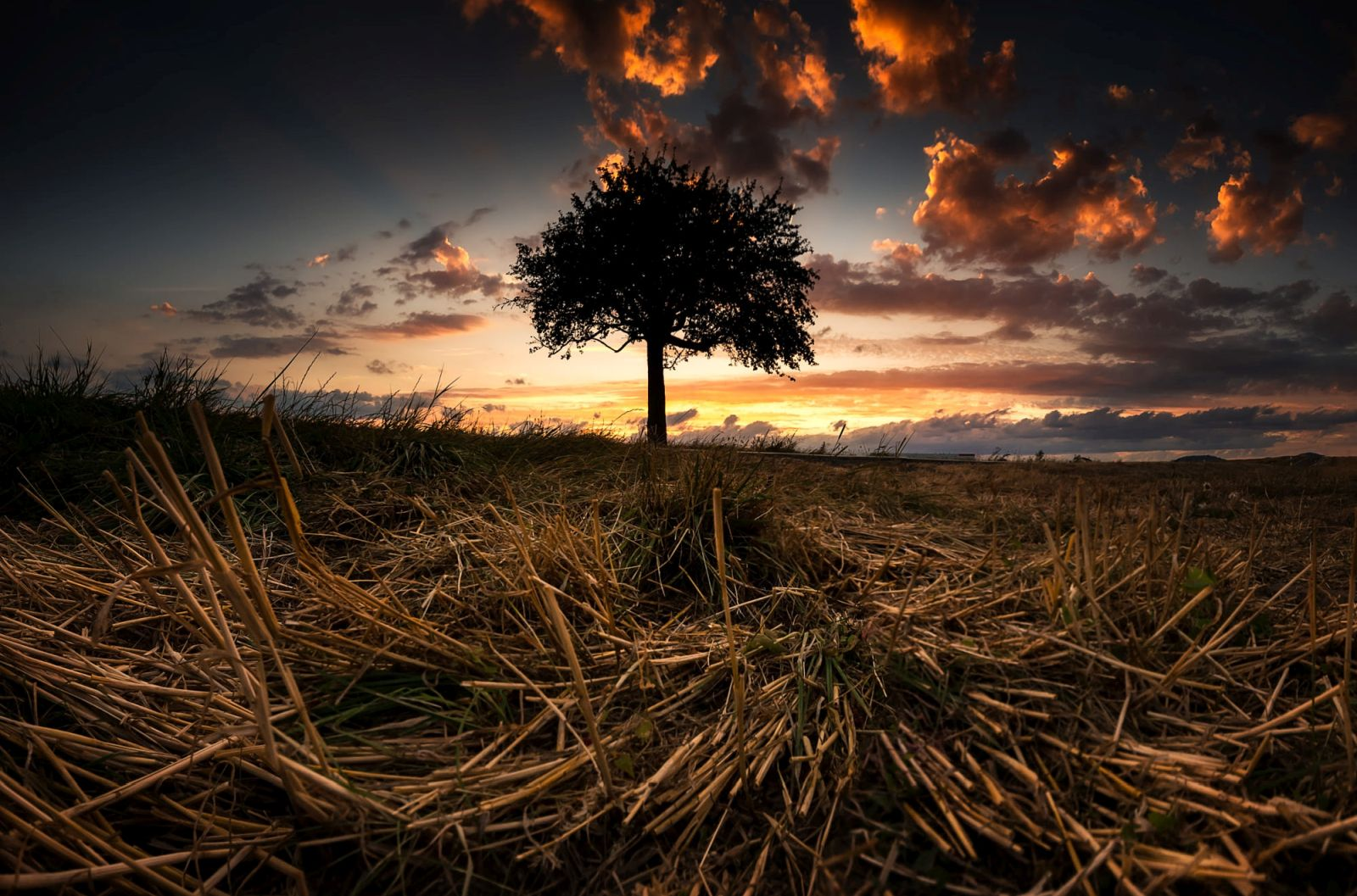 beautiful solitary tree photography highm